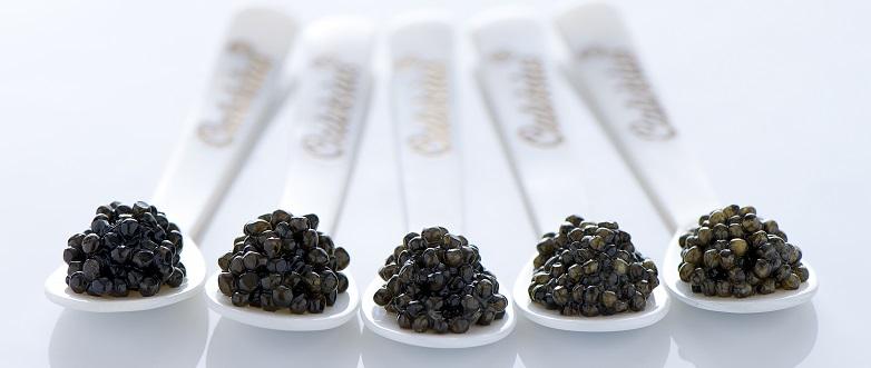tipos_caviar